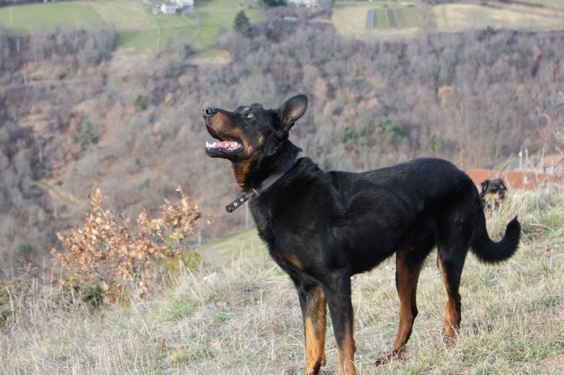 LE BEAUCERON - Page 13 Img_1310