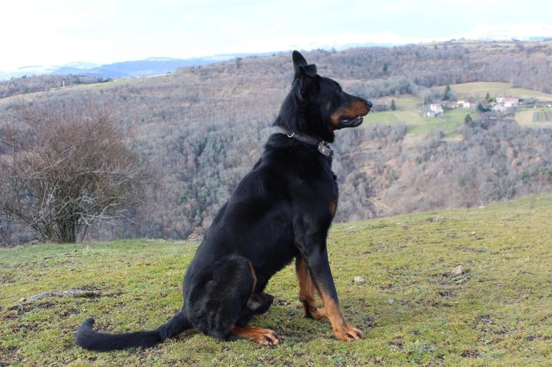LE BEAUCERON - Page 13 Img_1311