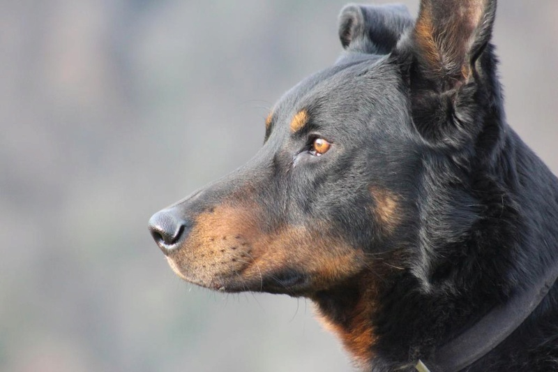 LE BEAUCERON - Page 13 Img_1411