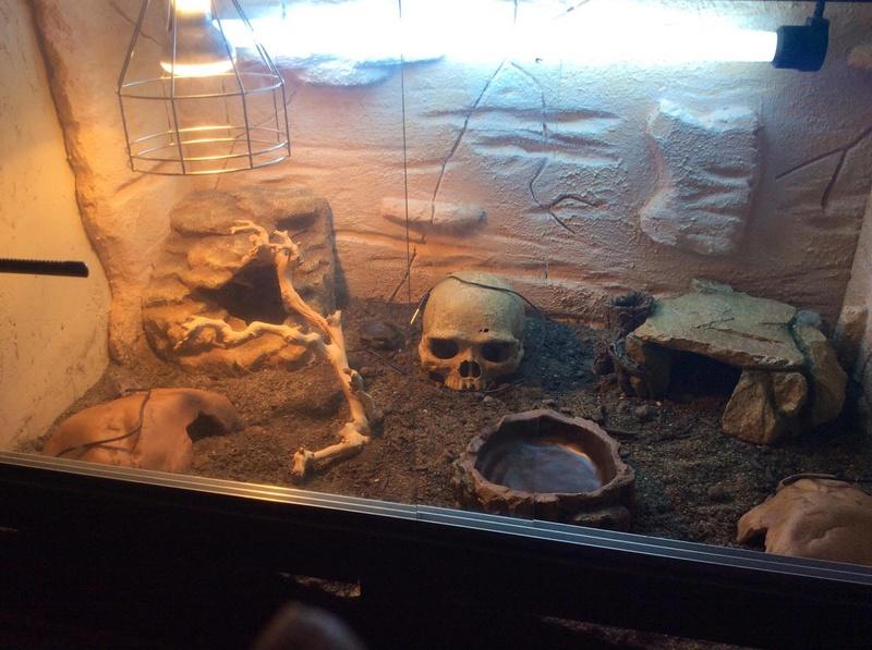Construction  d'un terrarium pour mon gecko - Page 3 17101110