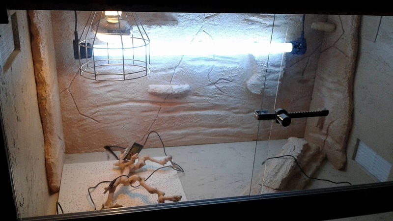 Construction  d'un terrarium pour mon gecko - Page 3 17101411