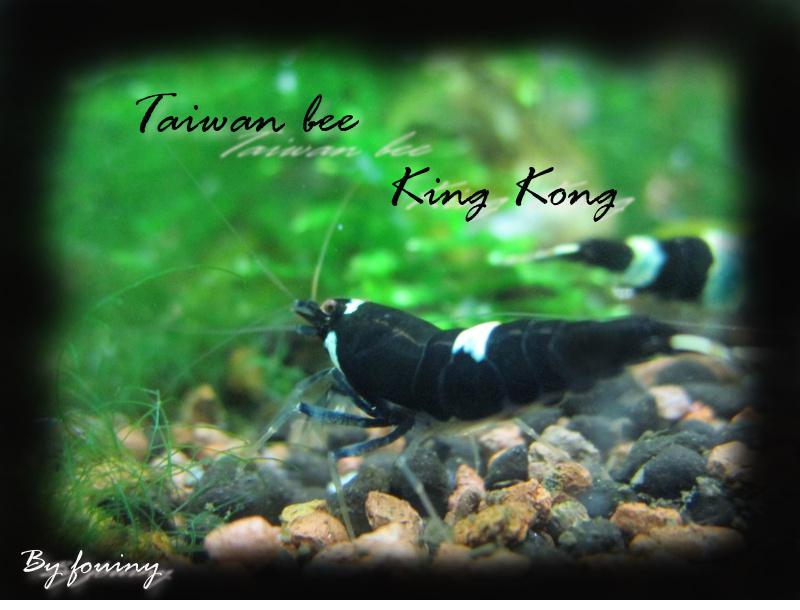 Recueil de photo aquariophiles de qualités Twb_ki10