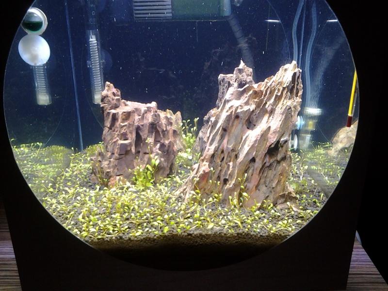 Iwagumi 60 litres 20140110