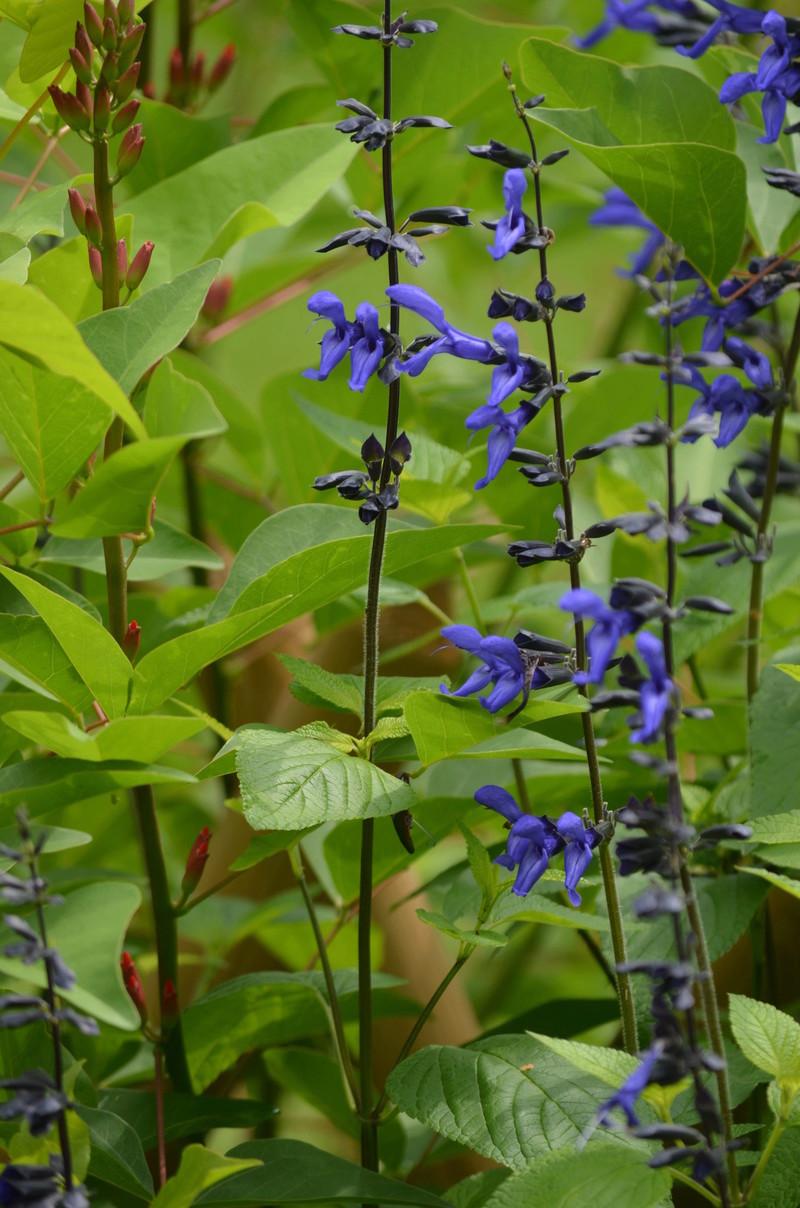 (81) Le jardin des Martels - Giroussens Dsc_0121