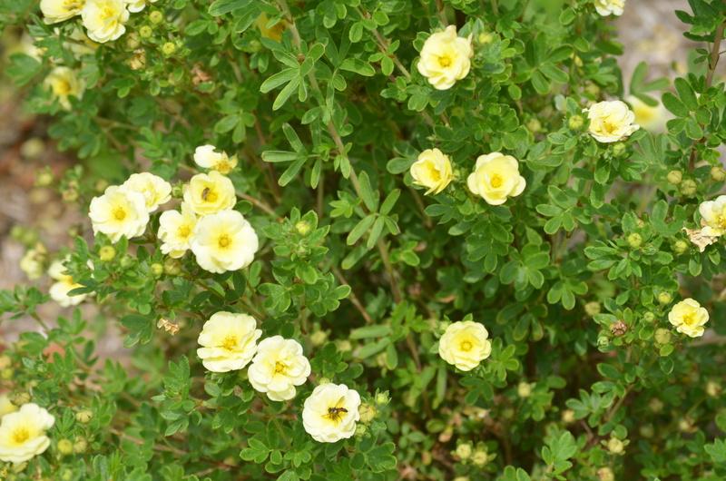 (81) Le jardin des Martels - Giroussens Dsc_0135