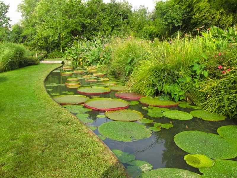 Aquatiques du Jardin des Martels Jardin16