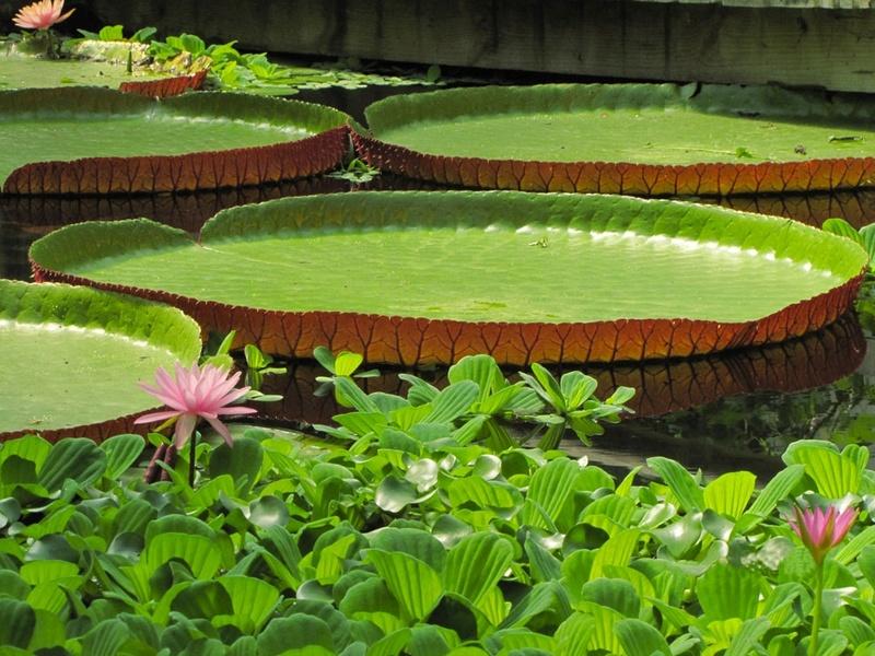 Aquatiques du Jardin des Martels Jardin17
