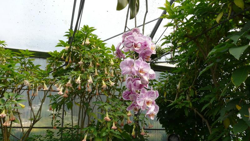Les orchidées du Jardin des Martels P1140322