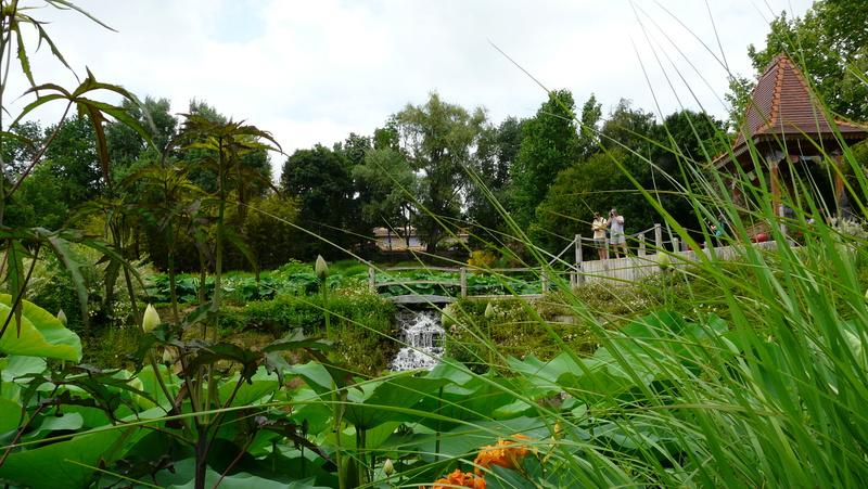 Aquatiques du Jardin des Martels P1140411