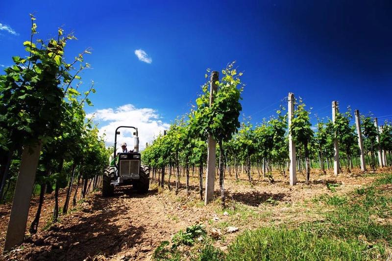 Radovi & poslovi u vinogradu - Page 6 13718710