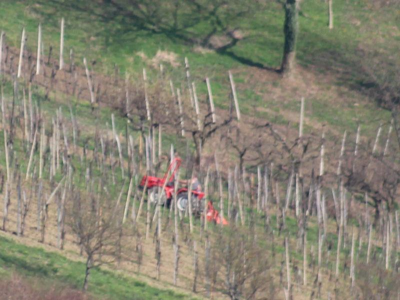Radovi & poslovi u vinogradu - Page 6 Jaskap10