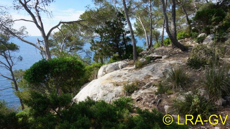 Voyage à Minorque, mai 2017 - 5 : Jeudi 18 mai : Cala Mitjana, Cala Trebaluger  Dsc05724