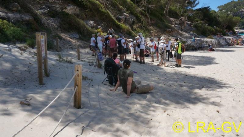 Voyage à Minorque, mai 2017 - 5 : Jeudi 18 mai : Cala Mitjana, Cala Trebaluger  Dsc05822