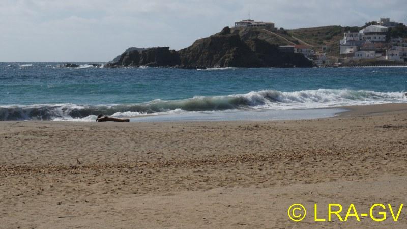 Voyage à Minorque, mai 2017 - 6 : Vendredi 19 mai : Sa Mesquiba , Es Grau Dsc05830