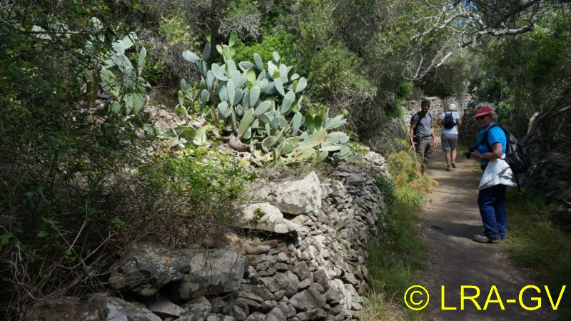 Voyage à Minorque, mai 2017 - 6 : Vendredi 19 mai : Sa Mesquiba , Es Grau Dsc05910