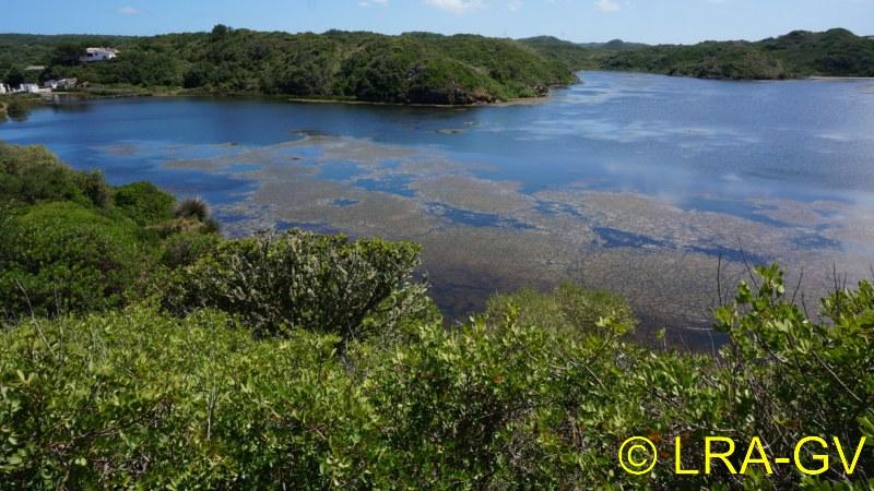 Voyage à Minorque, mai 2017 - 6 : Vendredi 19 mai : Sa Mesquiba , Es Grau Dsc05926