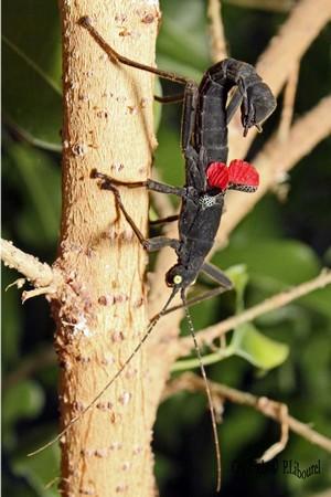 Le monde merveilleux des insectes - Page 2 Insect12