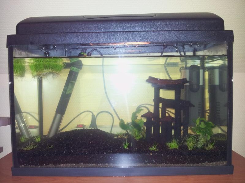 Mon premier aquarium 20140127