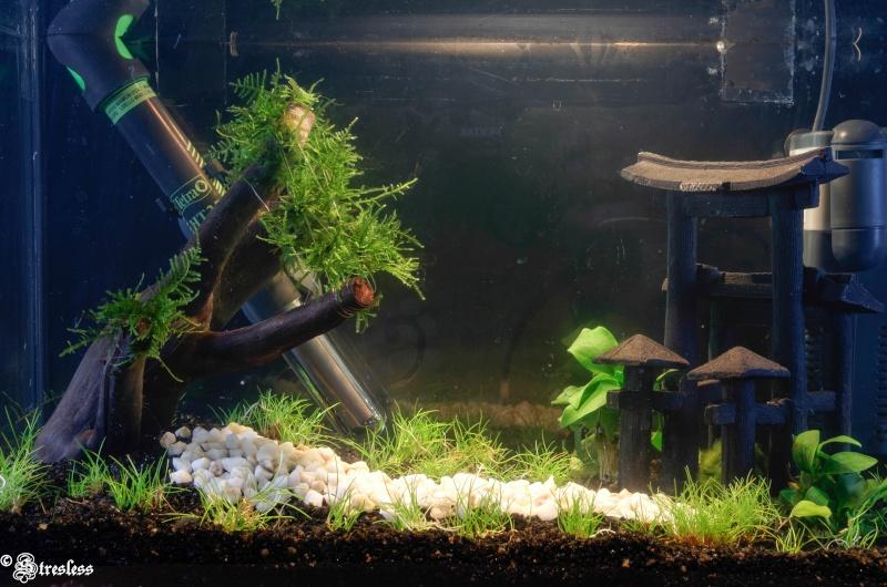 Des news de mon 20 L Aquari10