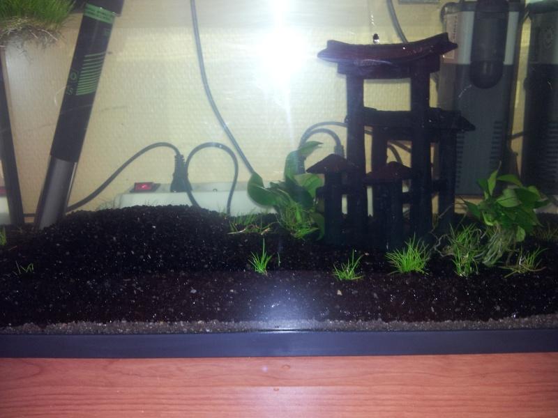 Mon premier aquarium Bac_le11