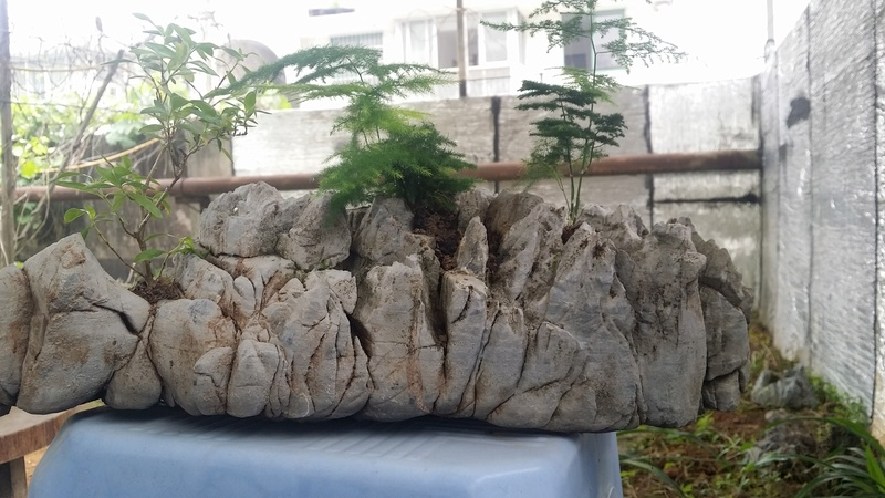 I am learning to grow plants on my stones Oi211