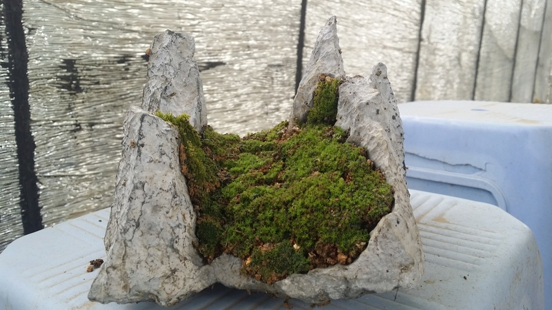 I am learning to grow plants on my stones Oi311