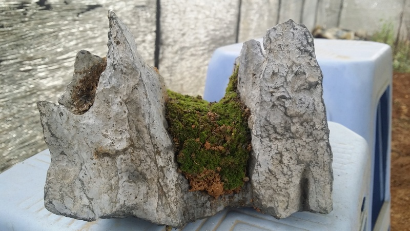I am learning to grow plants on my stones Oi411