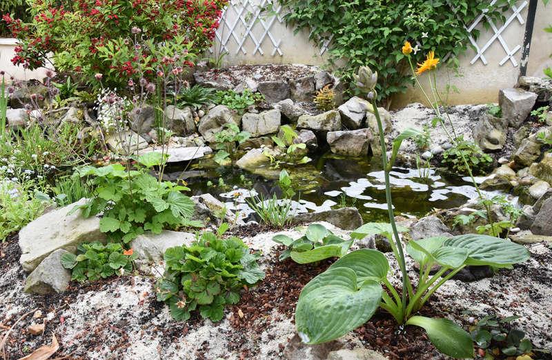 Bassin et cascade - Page 4 Vue_ba10