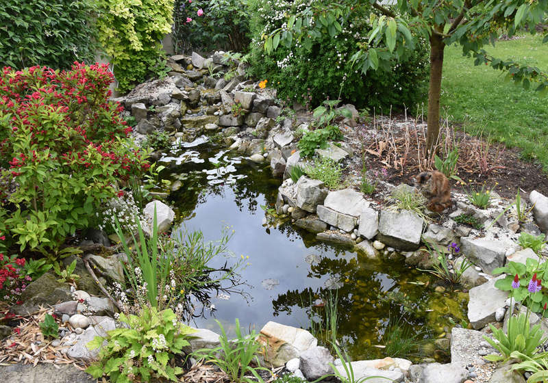 Bassin et cascade - Page 4 Vue_ba12