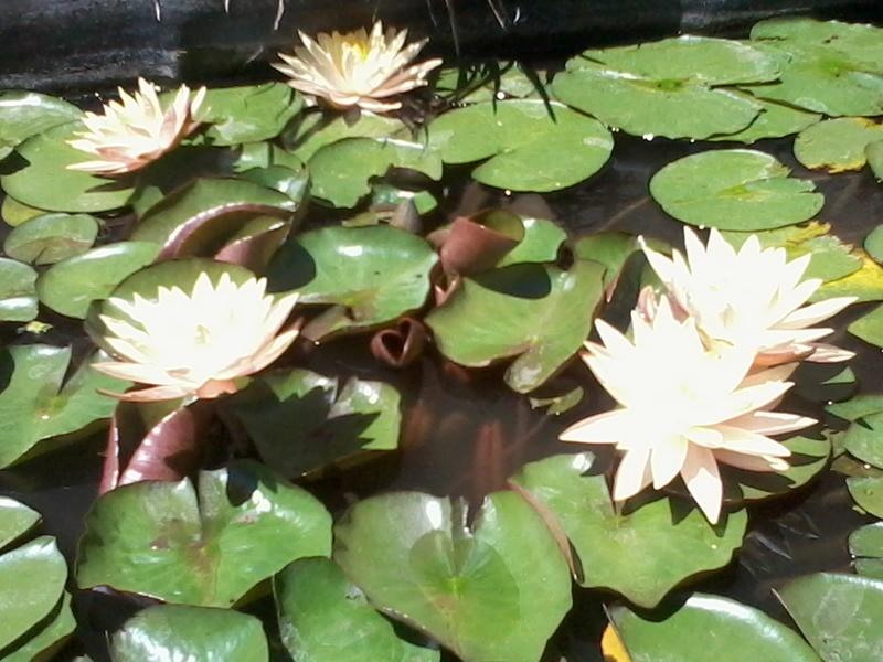 reamenagement de mon bassin de jardin - Page 9 2017-554