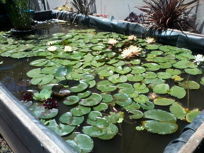 reamenagement de mon bassin de jardin - Page 9 2017-559