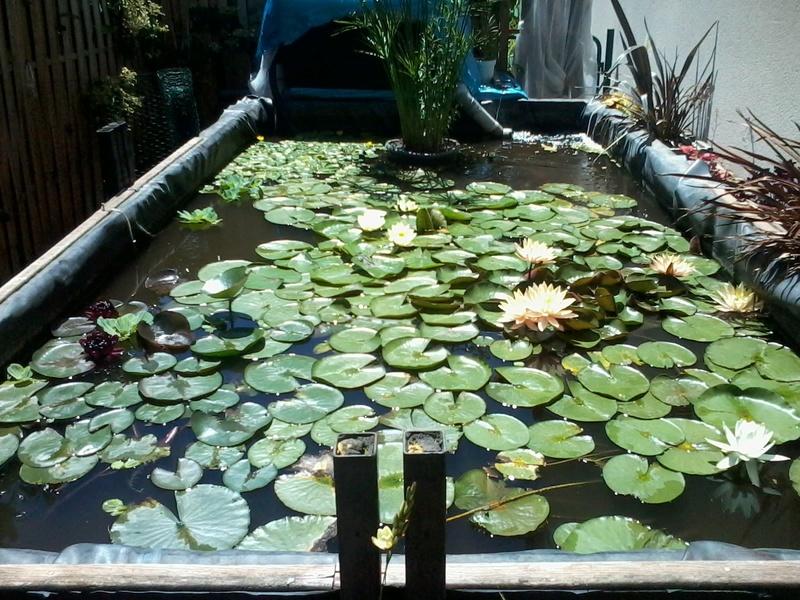 reamenagement de mon bassin de jardin - Page 9 2017-560