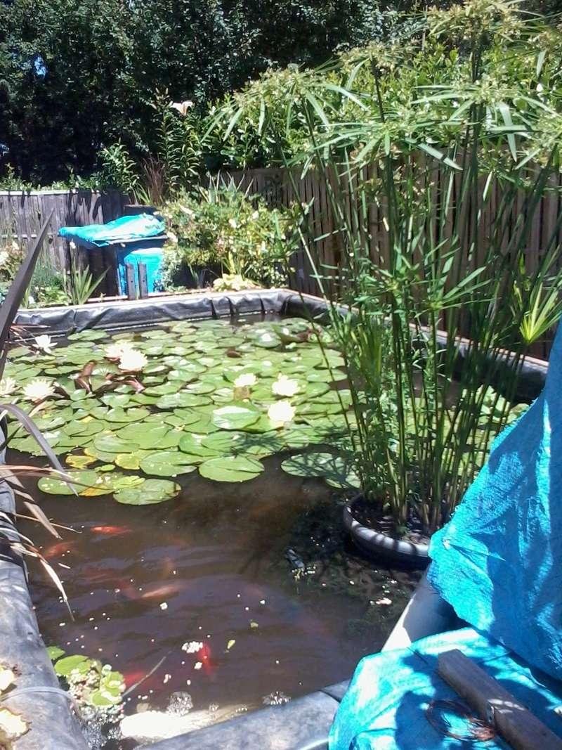 reamenagement de mon bassin de jardin - Page 9 2017-561
