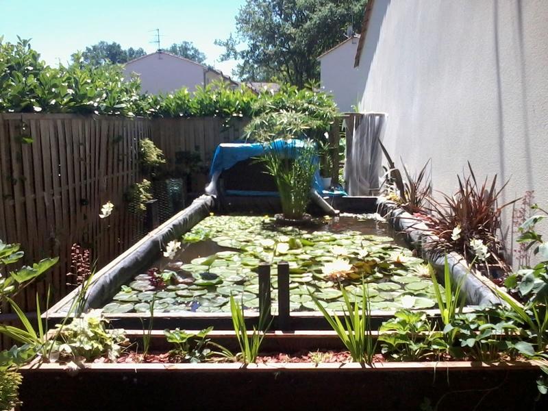 reamenagement de mon bassin de jardin - Page 9 2017-562