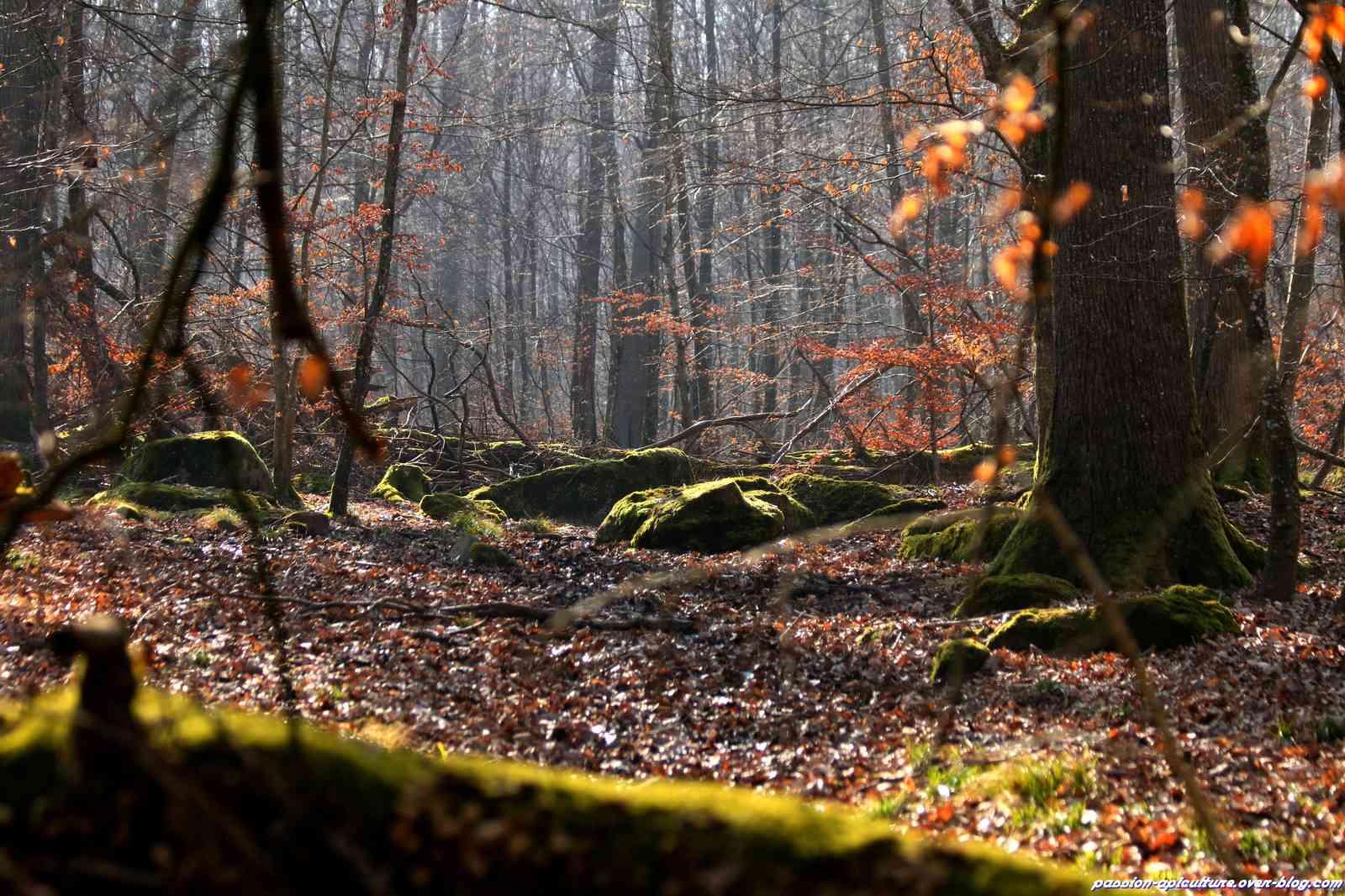 Un Renard dans les Bois... Foret-10