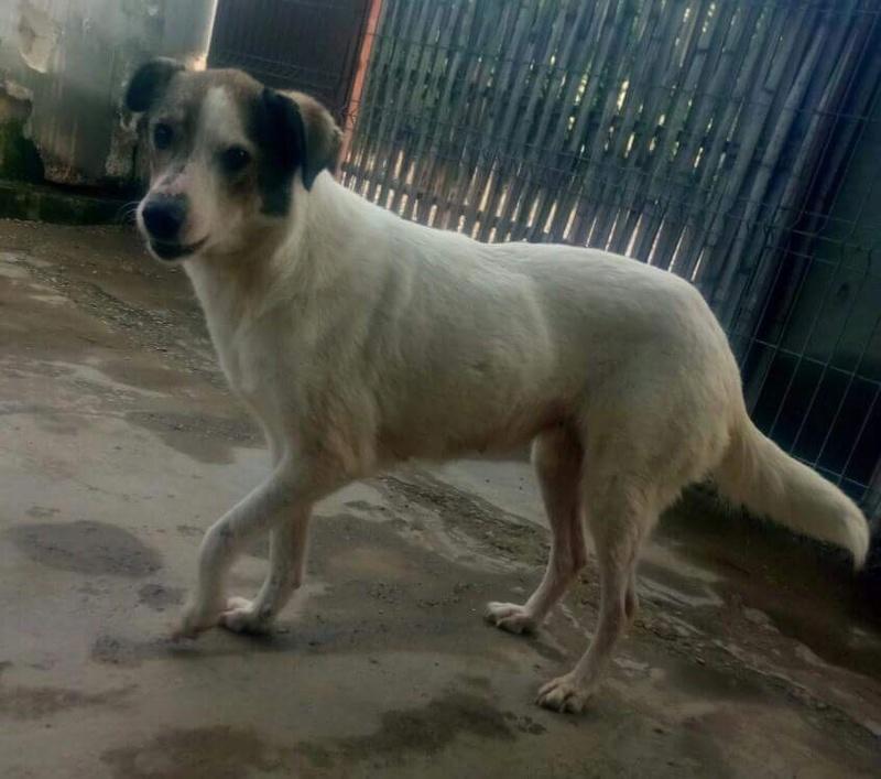 TONJA, F-X, taille moyenne, née 2013 (TAMARA/HAR) Prise en charge Asso Cent PAS - Page 2 Img_0333