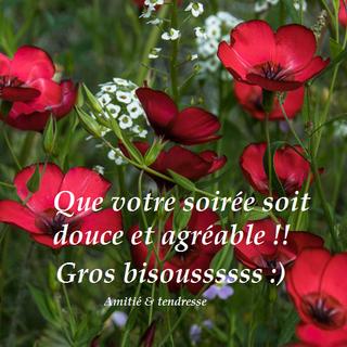 LES BONSOIRS DU SOIR  17862310