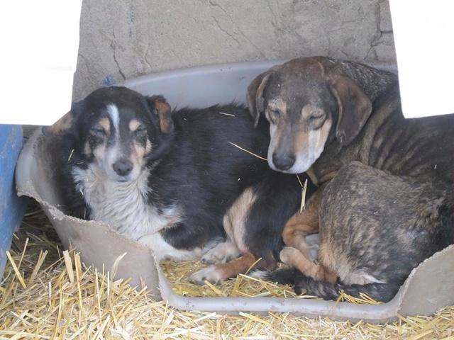 novembre 2020 - INNA - née 2011 - 13 kg - timide et gentille - (BELLA) - PRÊTE EN OCTOBRE 2020 03_20126