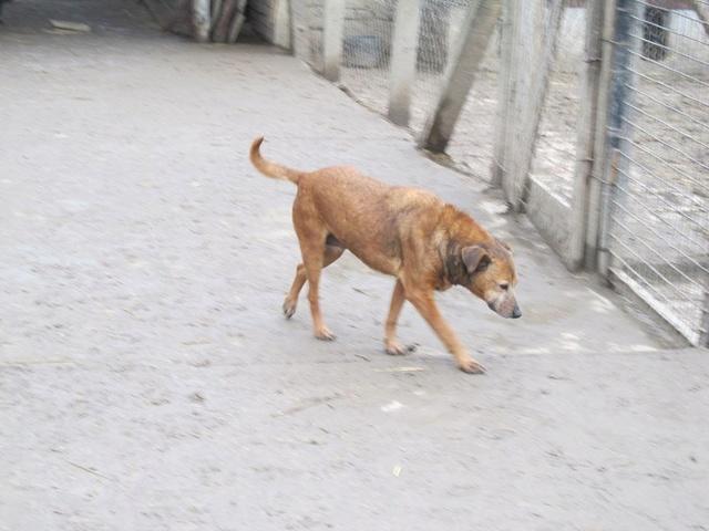 DIANA, F-X, née 2006, 14 kg (BELLA) - Prise en charge Asso ANIMALS RESCUE (BELGIQUE) - Page 3 03_20363