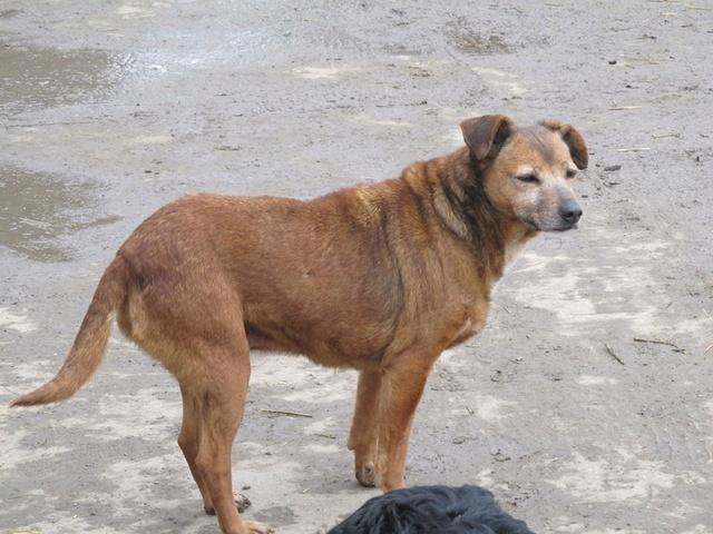 DIANA, F-X, née 2006, 14 kg (BELLA) - Prise en charge Asso ANIMALS RESCUE (BELGIQUE) - Page 3 03_20365