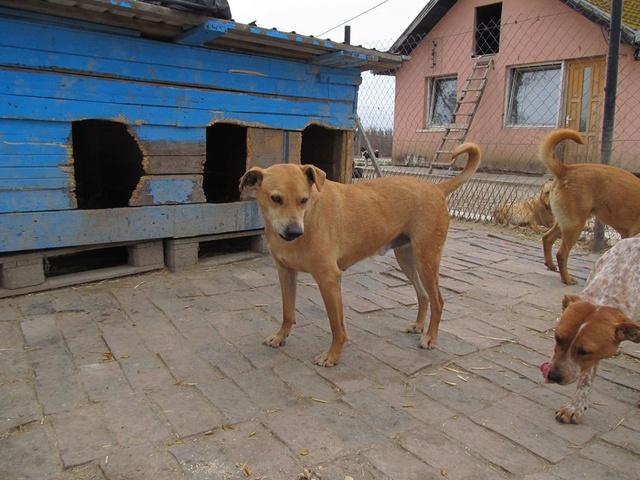 KIMBO - Né 2010 - Timide, il grandit au refuge... - (BELLA) - URGENT : PRET A RENTRER !! - Page 6 04_20144