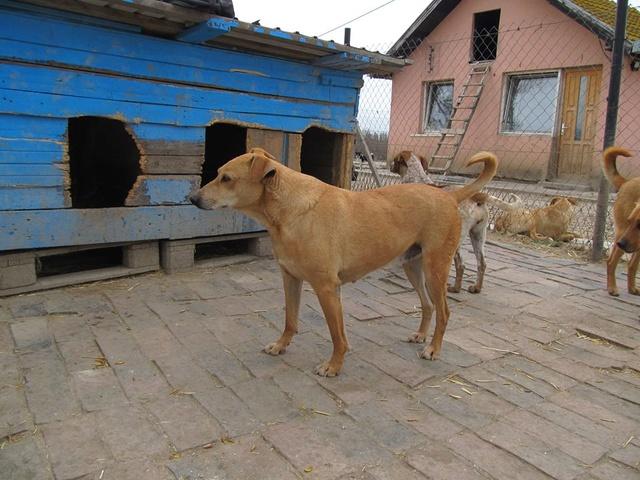 KIMBO - Né 2010 - Timide, il grandit au refuge... - (BELLA) - URGENT : PRET A RENTRER !! - Page 6 04_20145