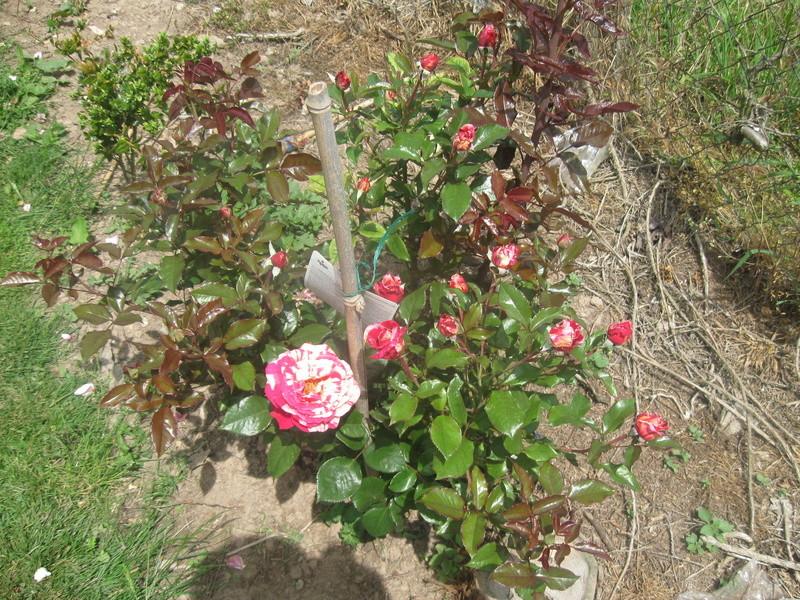 visite de mets  fleurs  Harico36