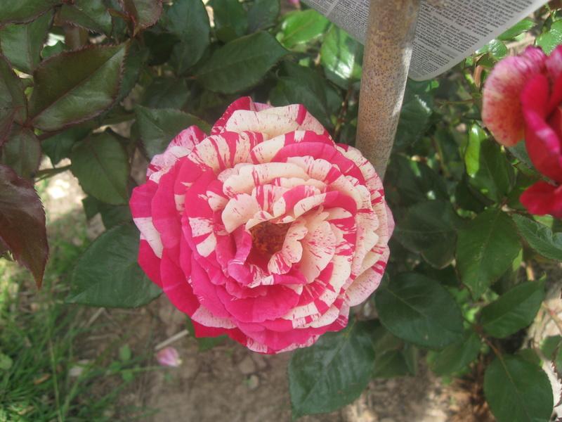 visite de mets  fleurs  Harico37
