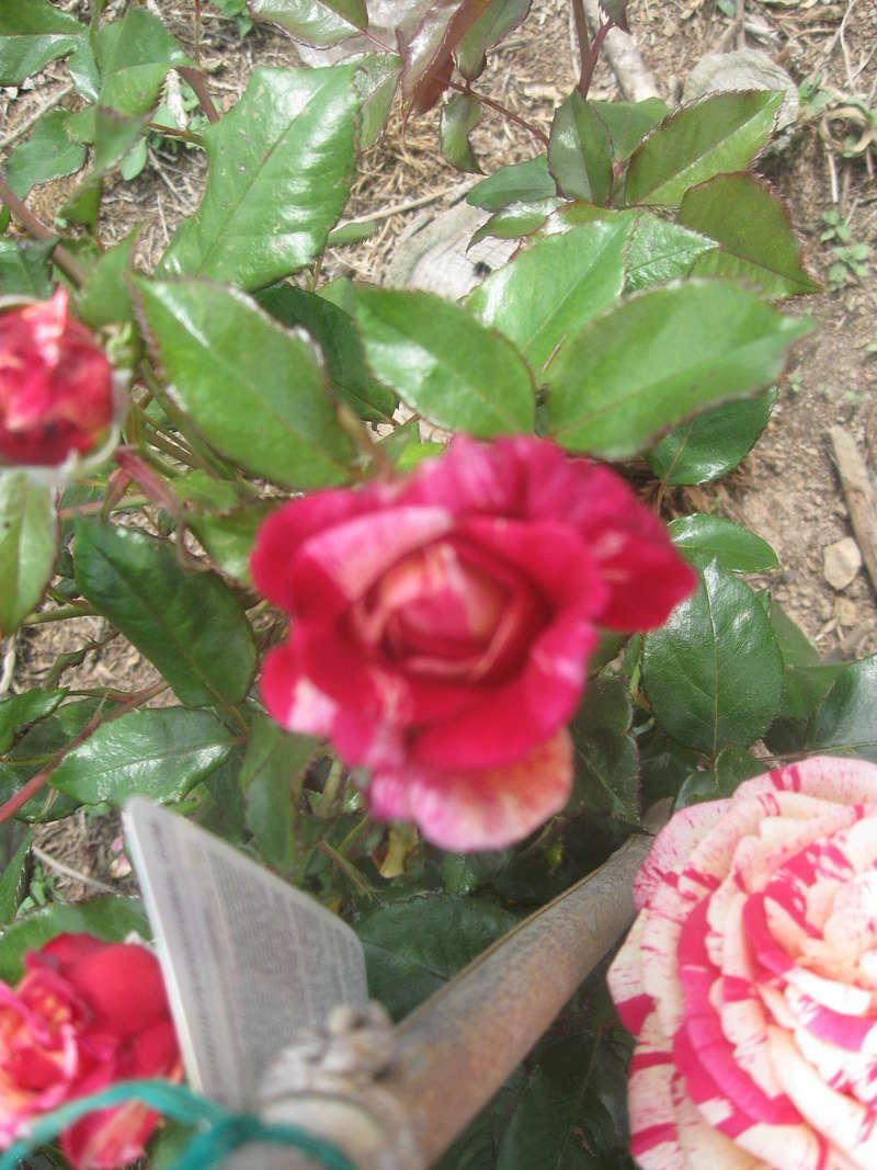 visite de mets  fleurs  Harico38