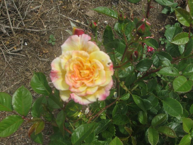 visite de mets  fleurs  Harico39