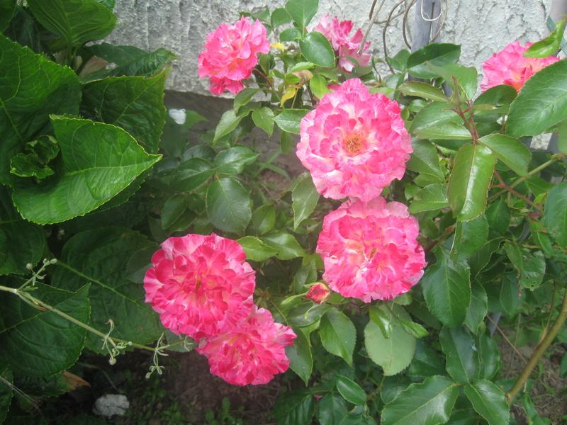 visite de mets  fleurs  Harico40
