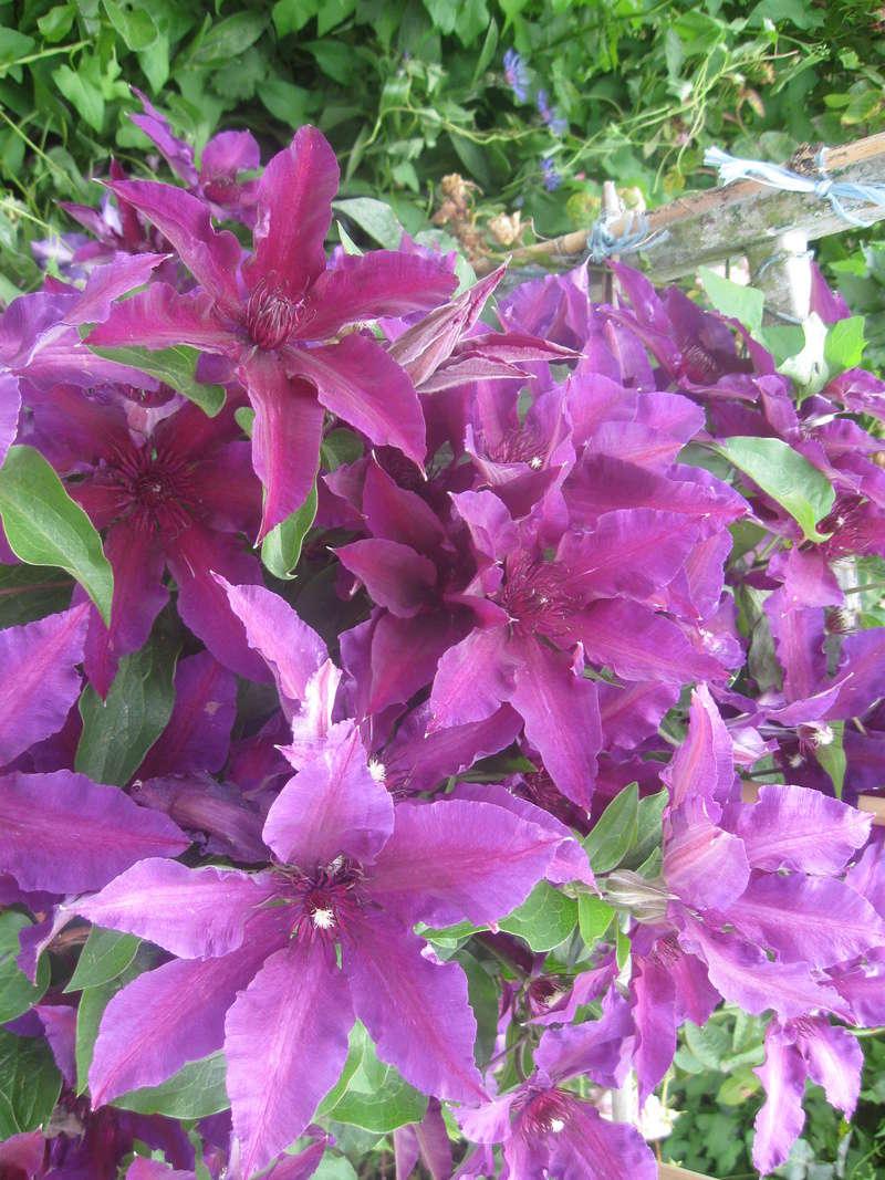 visite de mets  fleurs  Harico44