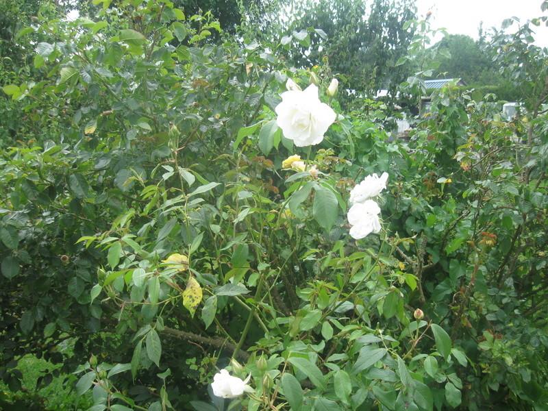 visite de mets  fleurs  Harico45