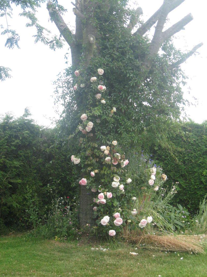 visite de mets  fleurs  Harico46